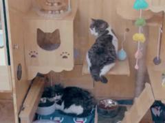 真猫奴?百度工程师打造全球首个AI流浪猫窝