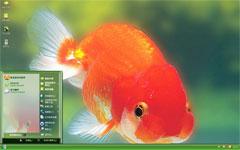 漂亮金鱼xp精美主题