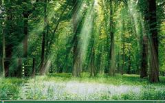 清爽森林xp主题