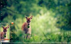 森林中的呆萌小鹿Win7主题