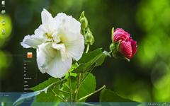 清新美丽的花卉护眼Win7主题
