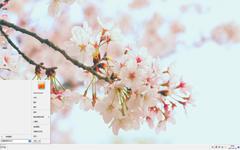 唯美清新的樱花景色Win7主题